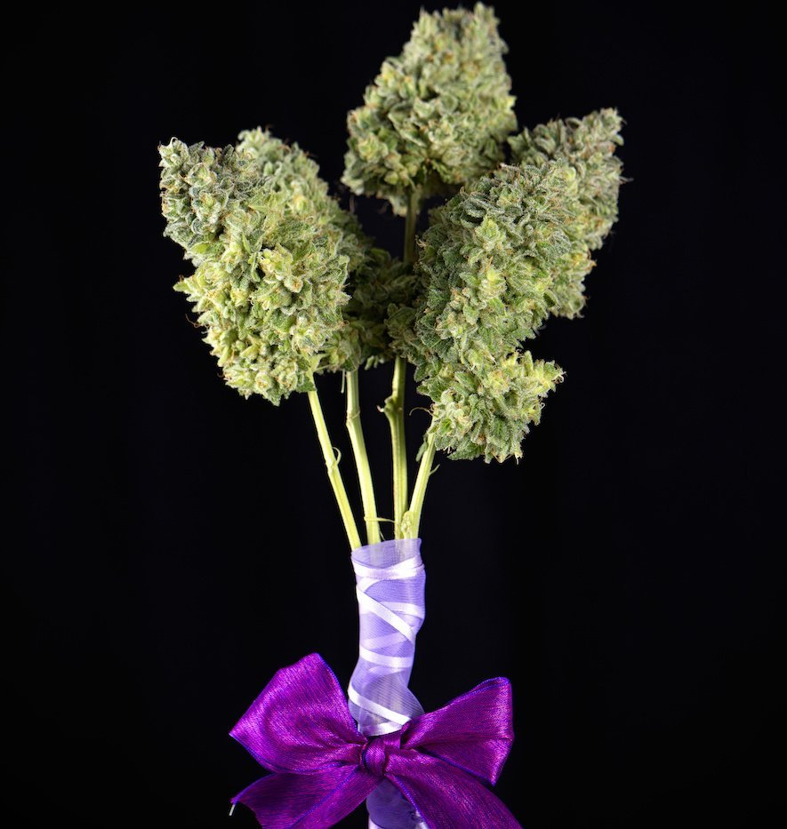 Bouquet of fresh cannabis flowers (Mangolope marijuana strain) trimmed and wrapped in purple ribbon
